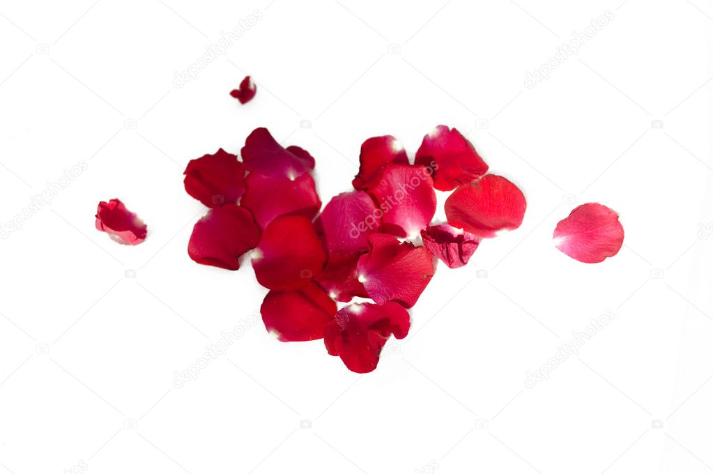 Petals of roses...  Stock Photo #3433553