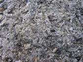 Arboreal ash — Stock Photo