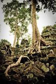 Ta prohm temple with trees — Fotografia Stock