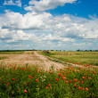 Rural landscape with potty flowers — Stock Photo