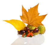 Composition of autumn chestnuts and leaves — Stock Photo