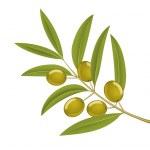 Olive branch — Stockvector