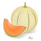 Meloa. — Vetor de Stock