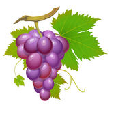 Purple grape — Stock Vector