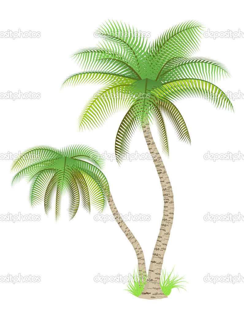 Vector illustration of palm trees over white — Stock Vector #2855269