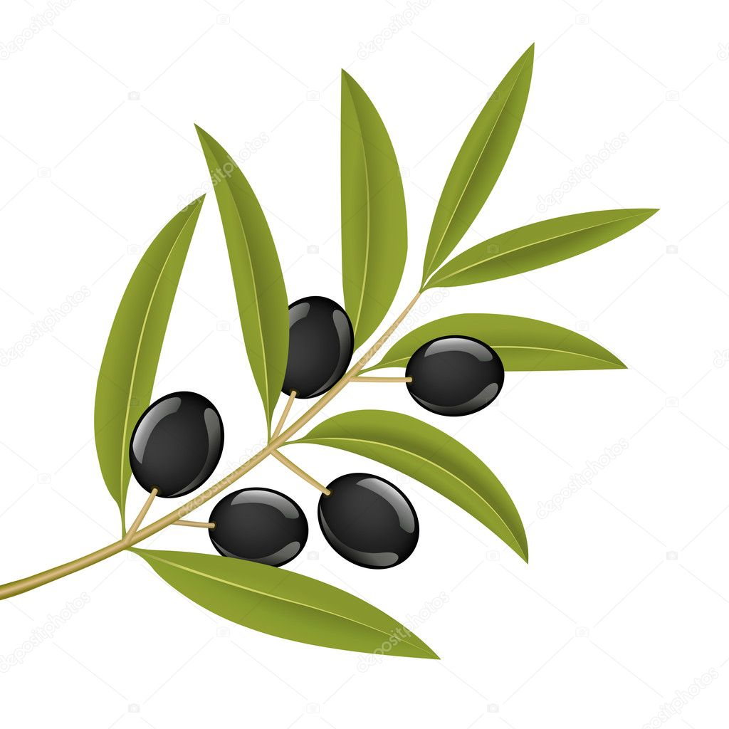 Black olives on branch, detailed vector illustration — Stok Vektör #2855272