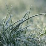 Frozen grass — Stock Photo #2902049