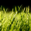 Grass blades — Stock Photo #2902056