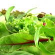 Mesclun en gros plan - Stock Photo