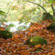 Autumn in the forest — Foto de Stock