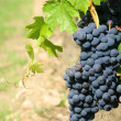 Black grapes detail — Stock Photo