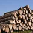 Stock Photo: Sawn trees