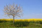 Absolutamente primavera — Foto Stock