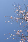 Arbre en fleur — Fotografia Stock
