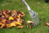 Raking the leaves — Stock Photo