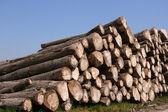 Sawn trees — Stock Photo