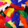 Multicolor feathers — Stock Photo