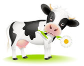 Little cow eating daisy — Stock Vector