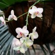 Orchids exhibition — Stock Photo