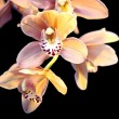 Orchids against the black background - Foto Stock