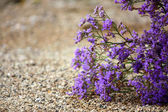 Desert flowers — Stock Photo