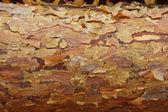 Pine Bark — Stock Photo