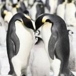 Emperor penguins — Stock Photo #2810254