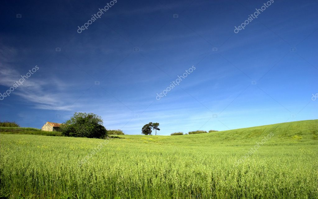 Green field landscape with a great blue sky — Stock Photo #4059993