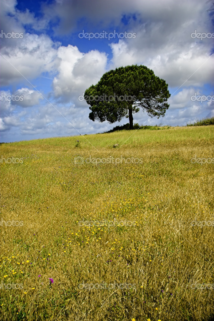 Landscape of a meadow with a beautiful blue sky  Stock Photo #4060004