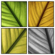 Autumn leaf details - Stock Photo