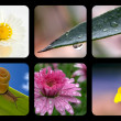 Nature collage with nature elements — Stock Photo