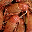 Lobsters - Stock Photo