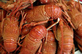 Lobsters — Stock Photo
