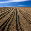 Royalty-Free Stock Photo: Ploughed field