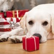 Royalty-Free Stock Photo: Christmas Dog