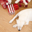 Christmas Dog — Stock Photo #4938335