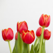 Orange Tulips — Stock Photo #4938696