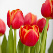 Orange Tulips — Stock Photo #4938704