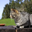 Cute Cat — Stock Photo #4938861