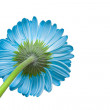 Flower — Stock Photo