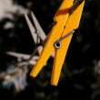 Stock Photo: Clothespin