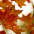 Fall leaves — Foto de stock #4939839