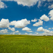 Green meadow — Stock Photo