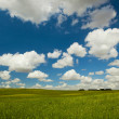 Green meadow — Stock Photo #4939971