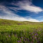 Green meadow — Stock Photo #4939994