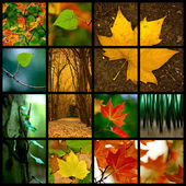 Autumn Theme — Stock Photo