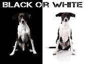 Schiena o cane bianco — Foto Stock