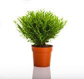 Zelená rostlina — Stock fotografie