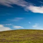 Green meadow — Stock Photo #4940039