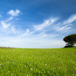 Green meadow — Stock Photo #4940159